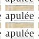 Soirée Apulée : une rencontre artistique pleine d'interrogation